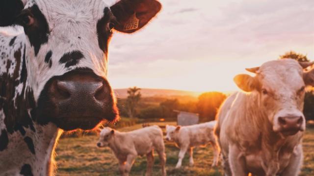 Segítséget nyújt a Nébih az állattartói adategyeztetéshez