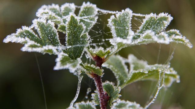 A hétvégén több helyen várható talajmenti fagy