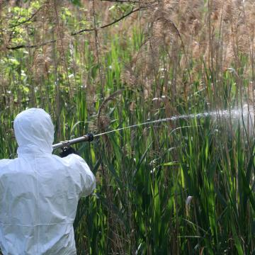 Folytatódik az országos szúnyoggyérítés