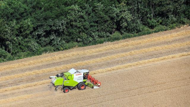 Két hét múlva kezdődhet az aratás
