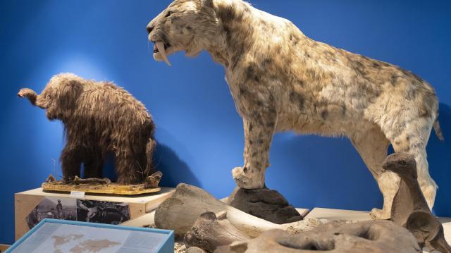 Már épül a Móra-múzeum új természettudományi kiállítása