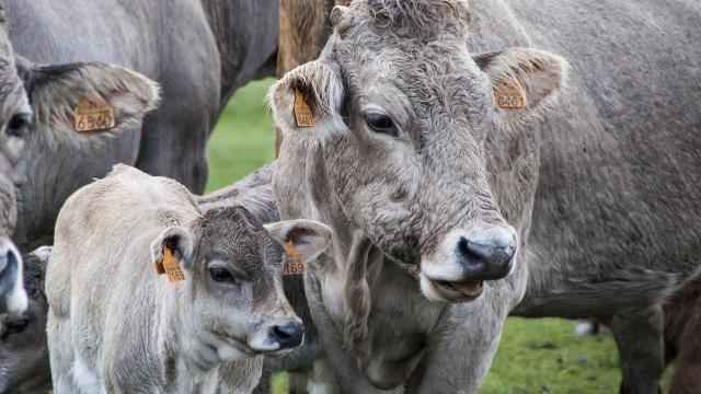 Új pályázat az állattenyésztés és kertészet támogatására