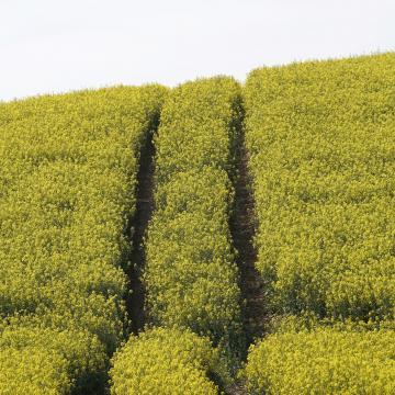 25 milliárdos támogatással segít a kormány a gazdáknak