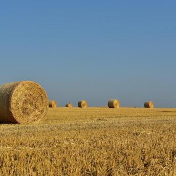 Csúszik az aratás a megyékben