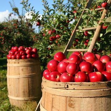 Ideje szerződést kötni az almára