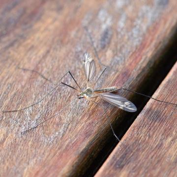 Itt lehet szúnyogirtásra számítani a héten