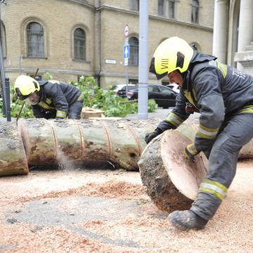 Kidőlt fák, leszakadt faágak adnak munkát a tűzoltóknak a megyében