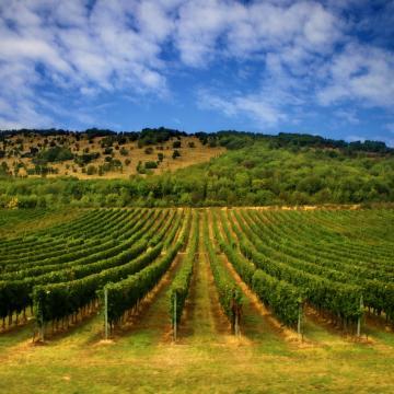 Már pályázhatnak a szőlészek-borászok a kárenyhítést szolgáló támogatásra