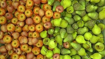 Nagyon kevés alma és körte terem idén