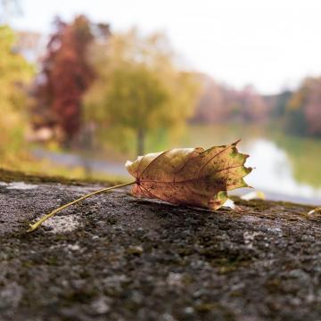 Az ősz kezdetére 10 fokkal hűl a levegő