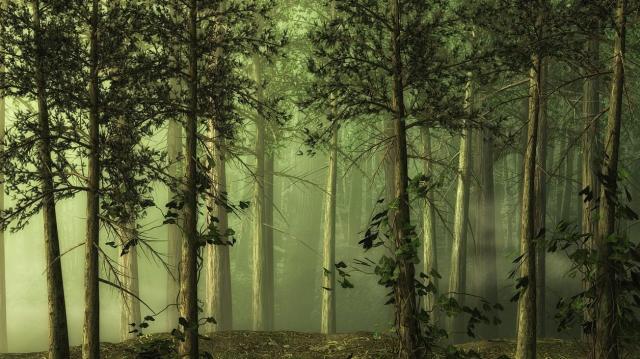 Idén Pest megyében települ a legnagyobb új erdő