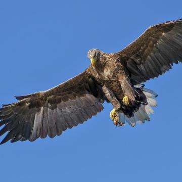 Országos madárfotó-pályázat a tatai Vadlúd Sokadalom alkalmából
