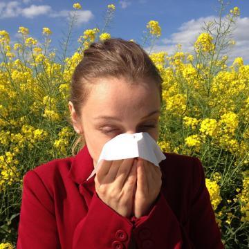 A lakosság húsz százaléka allergiás