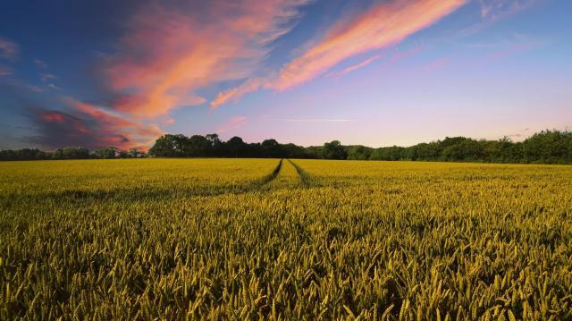 Egyszerűbb adózás a mezőgazdászoknak