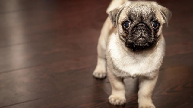 3D-modelleket készítettek kutyák agyáról a kutatók