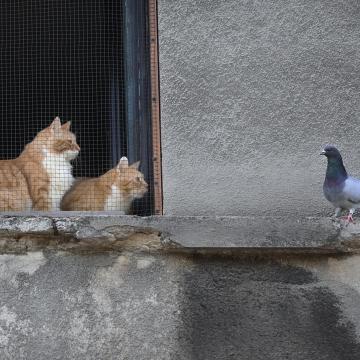A macskák nem panaszkodtak, a laborban derült ki mi kerül a tányérjukra