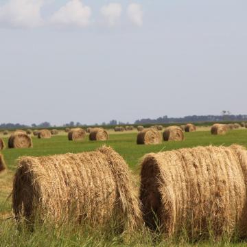 AM-államtitkár: a beruházások hozzájárulnak az agrárium fejlődéséhez