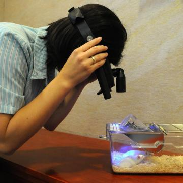 Megakadályozta a súlyos megbetegedést állatoknál a magyar koronavírus készítmény