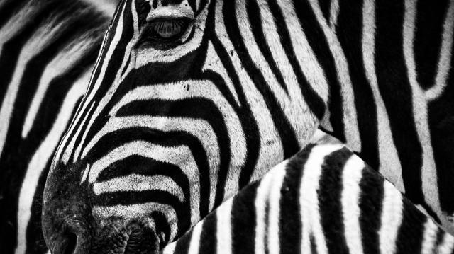 Több mint 880 állatfaj tízezer egyede él a Fővárosi Állat- és Növénykertben