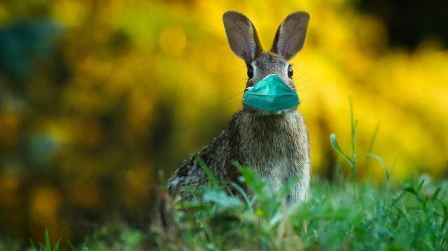 Galgóczi: húsvétkor is fontos az elővigyázatosság