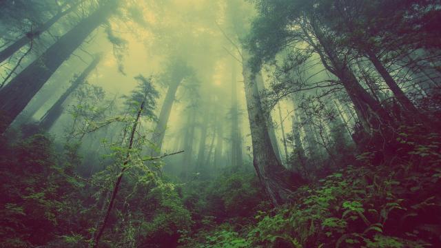 Közös feladat az erdők felkészítése a klímaváltozásra