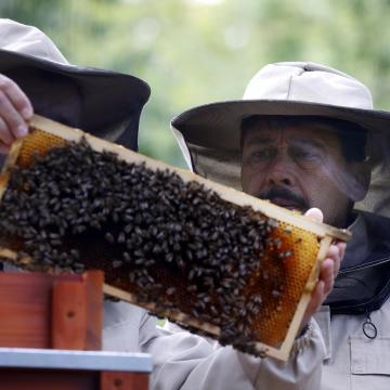 Összegyűltek a magyarországi aláírások a méhek megmentését célzó európai kezdeményezéshez