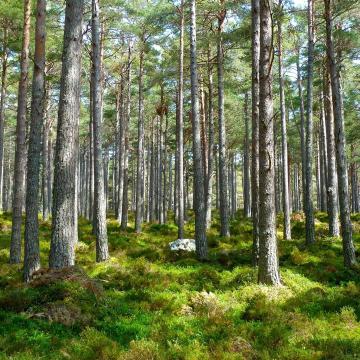 A környezetipar szereplői számára elindult a zöldállásportál