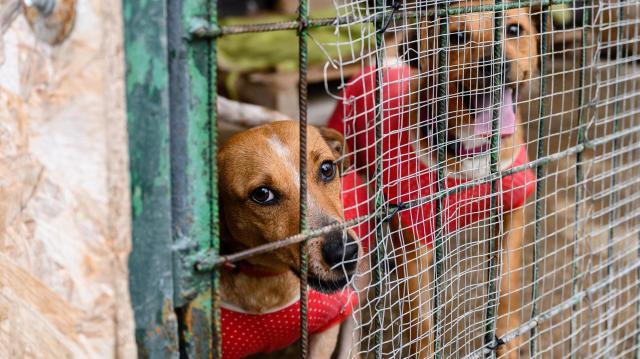 Állatvédő civil szervezetek munkáját támogatja Magyarország kormánya