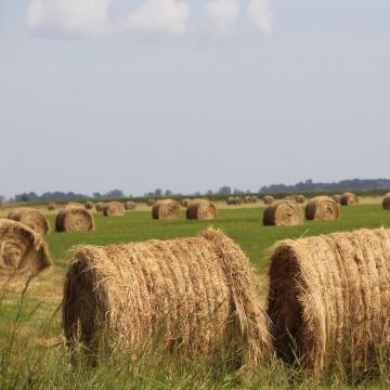 Az agrárpolitika elkötelezett a tejtermelés és tejfeldolgozás fejlesztése iránt