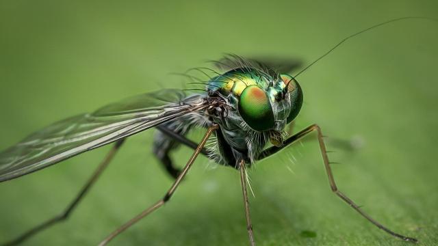 Biztonságosak a rovarriasztók a Tudatos Vásárlók Egyesületének terméktesztje szerint