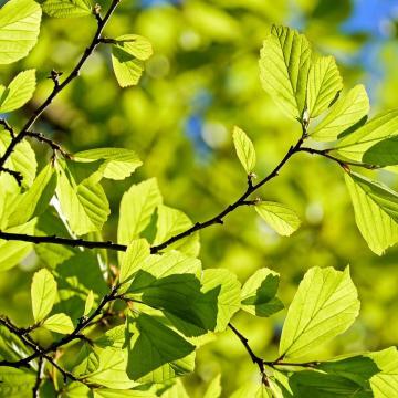 Július 5-től lehet fákat igényelni a Településfásítási program második ütemében