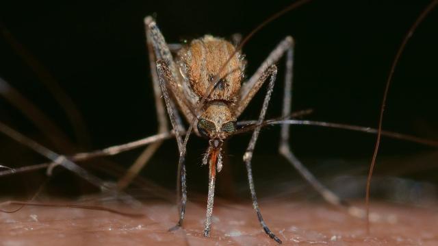Katasztrófavédelem: a vízparti területeken folytatódik a szúnyoggyérítés