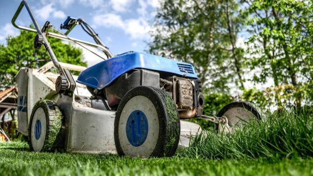 Megjelent a kertészeti üzemek megújítását támogató pályázati felhívás