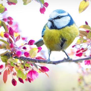 Több mint félezer madár pusztult el áramütés miatt Magyarországon