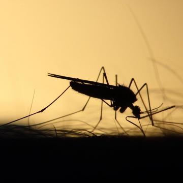 125 településen és hat fővárosi kerületben irtják a szúnyogokat