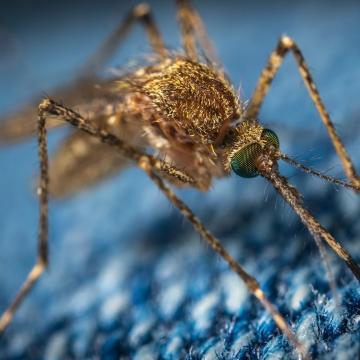 14 megyében folytatódik a szúnyogirtás