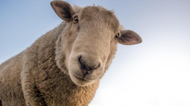Július 14-től újra lehet pályázni az állattartó telepek fejlesztési támogatására