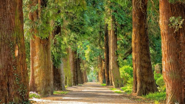 Közös felelősség az erdők megőrzése és gyarapítása