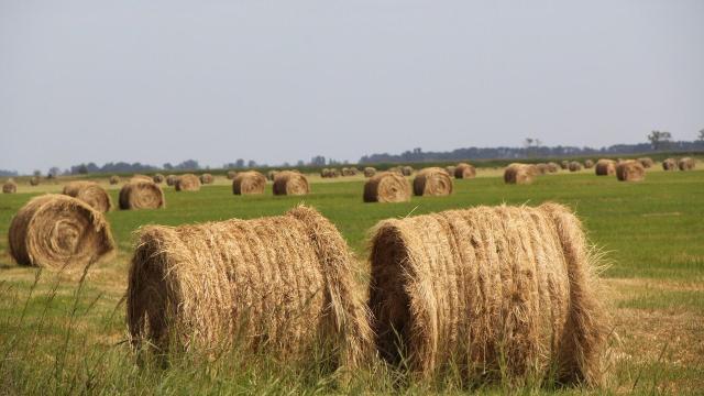 Új irányba fordult a magyar agrárdiplomácia