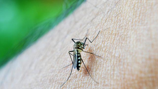 A héten 56 településen irtják a szúnyogokat