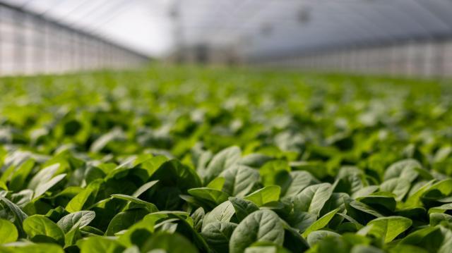 Főszerepben az agrárszektor: elkezdődött Magyarország legnagyobb mezőgazdasági kiállítása